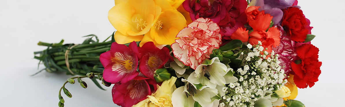 Guernsey Freesias bunch