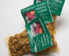 Freesia Corms by Post - £12.95