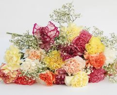 30 Carnations by Post - £38.95